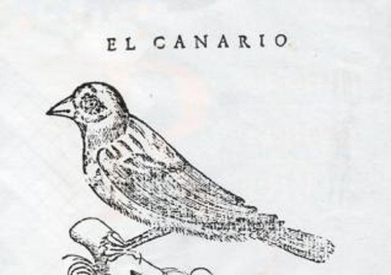 El pájaro canario